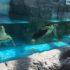 日和佐ウミガメ博物館カレッタ!2歳子連れで行ってきたのでレビューします。